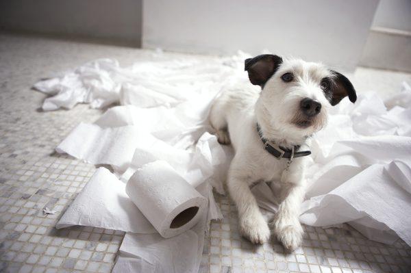 Как убрать запах мочи от домашних питомцев?