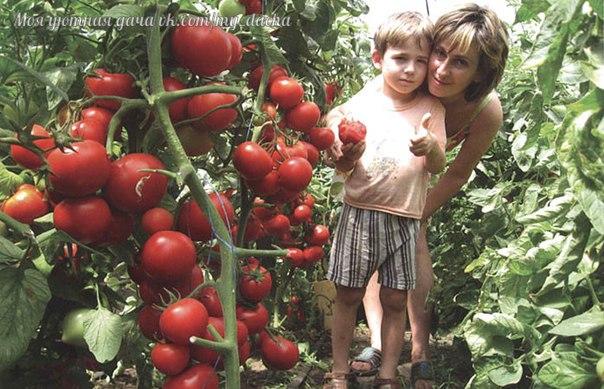 Порция советов для хорошего урожая