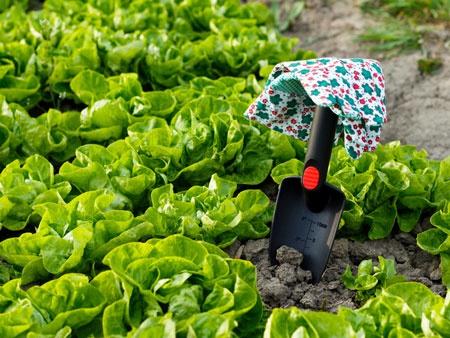 Как одно растение спасает целый урожай