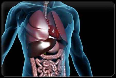 Мифы и факты о расстройствах нашей пищеварительной системы