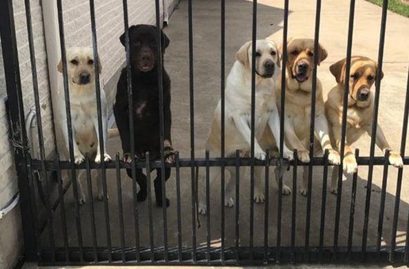 Тайный ритуал почтальона и пяти собак попал в объектив скрытой камеры