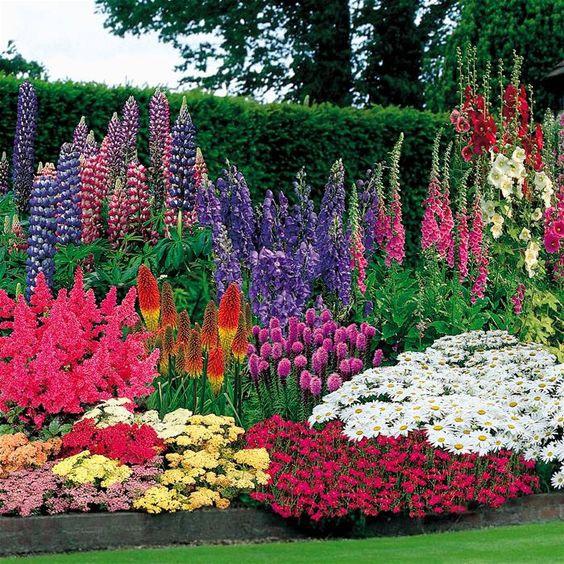 10 быстрорастущих растений для украшения вашего сада