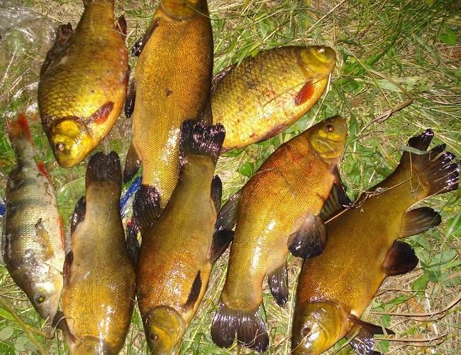 линь рыба ловля