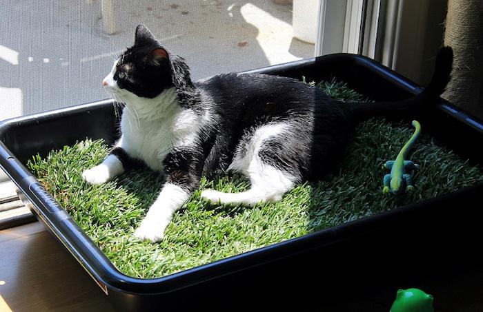 Личный газон кошке