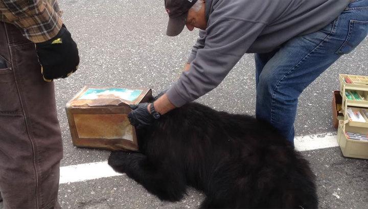 На Аляске спасли медведя, за…