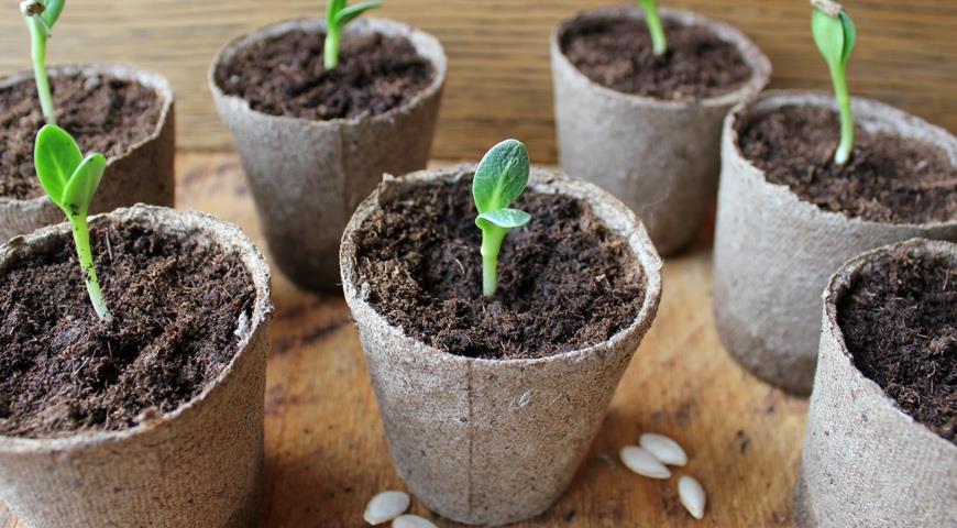 Огурцы: сильнее корни — больше урожай