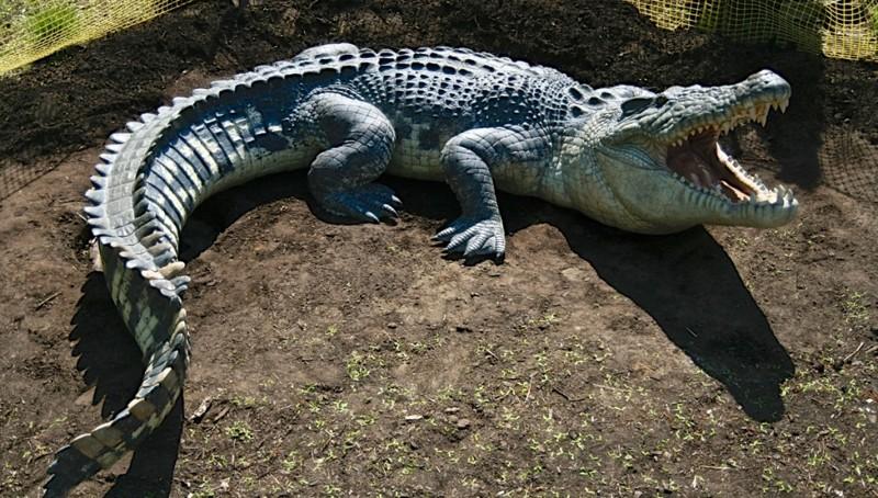 Крокодилы съели священника, демонстрировавшего, как Иисус ходил по воде