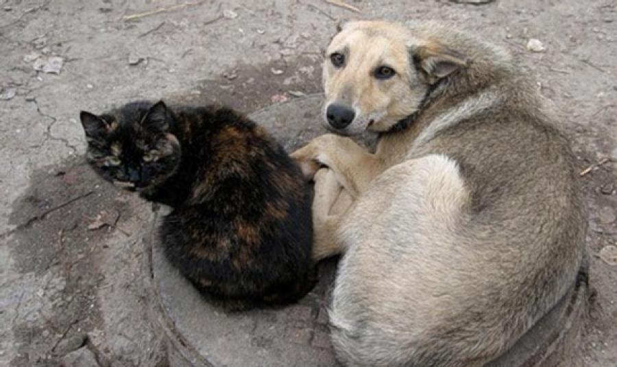 Мы сами в ответе за бездомны…