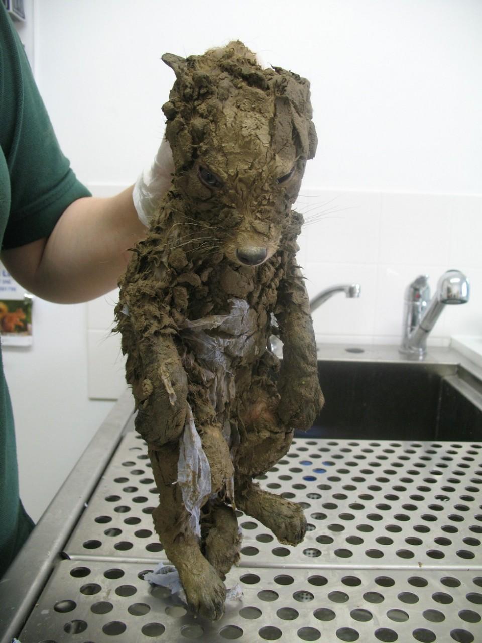 Они отмыли кусок грязи и вот кого обнаружили внутри!