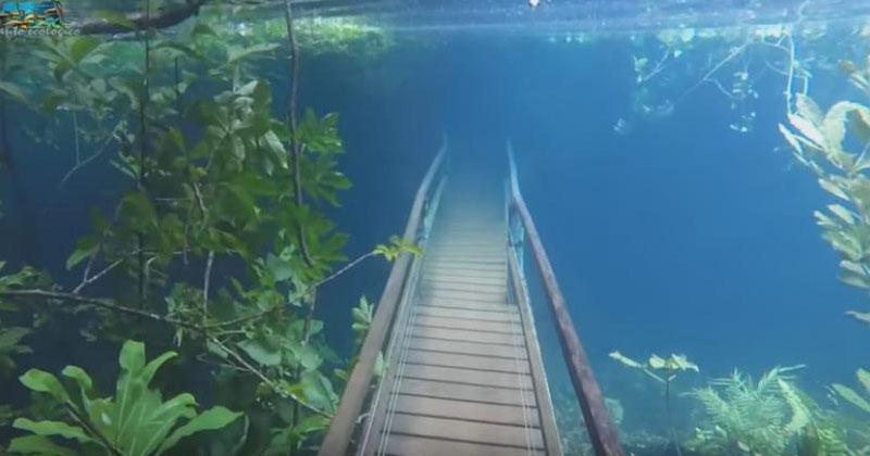 В лесу Бразилии случилось на…