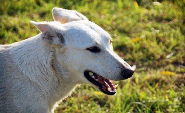Собака-инвалид Белочка, пронзительная история