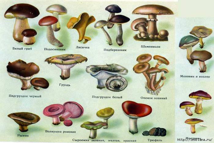 грибы (700x467, 167Kb)