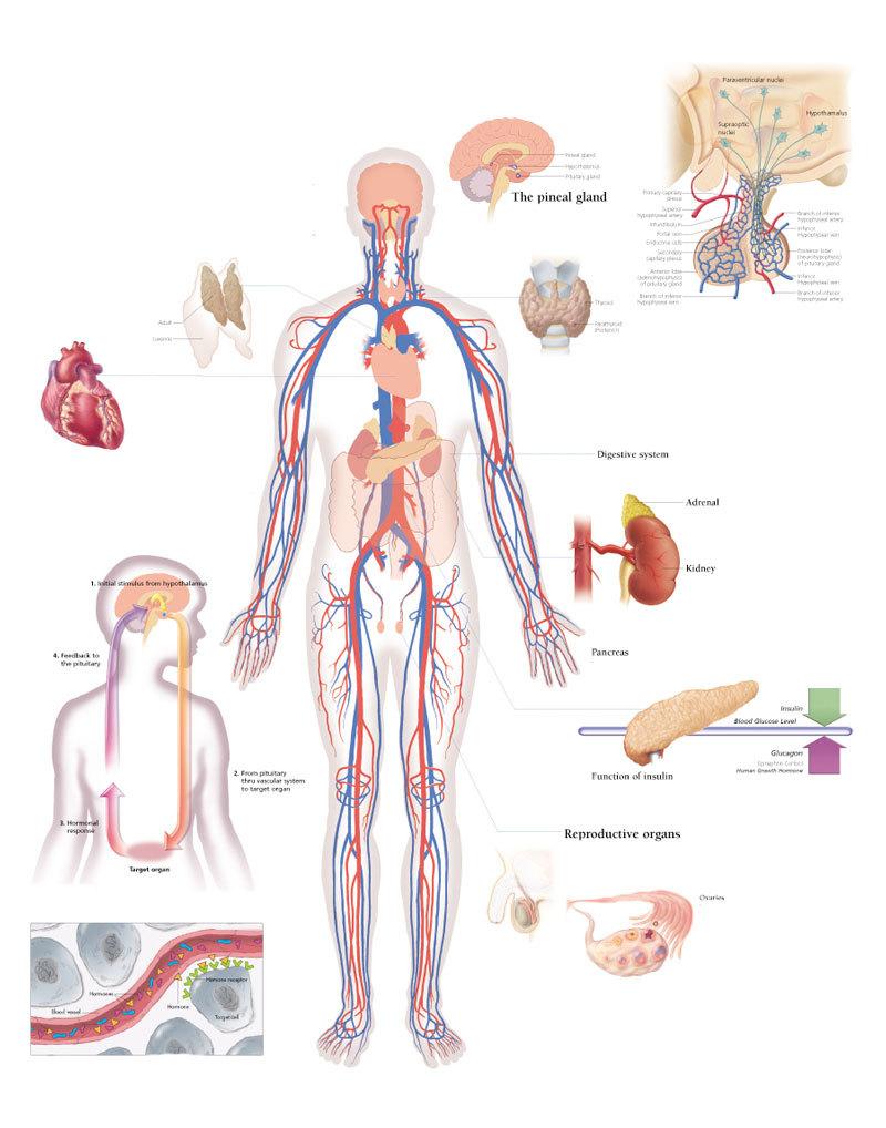 Советы по улучшению гормонального здоровья