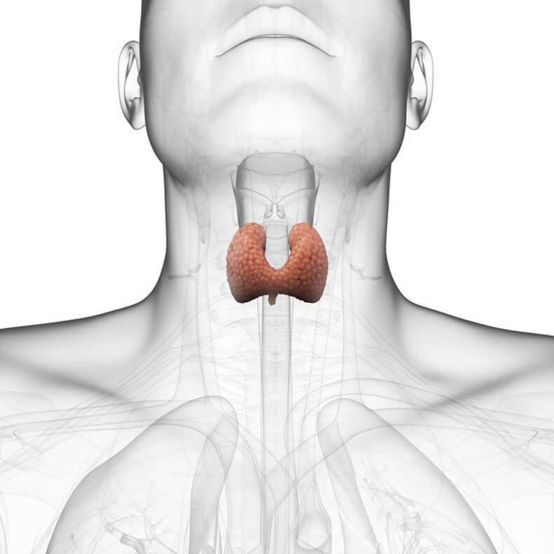 Заболевания щитовидной железы: психологические причины их возникновения