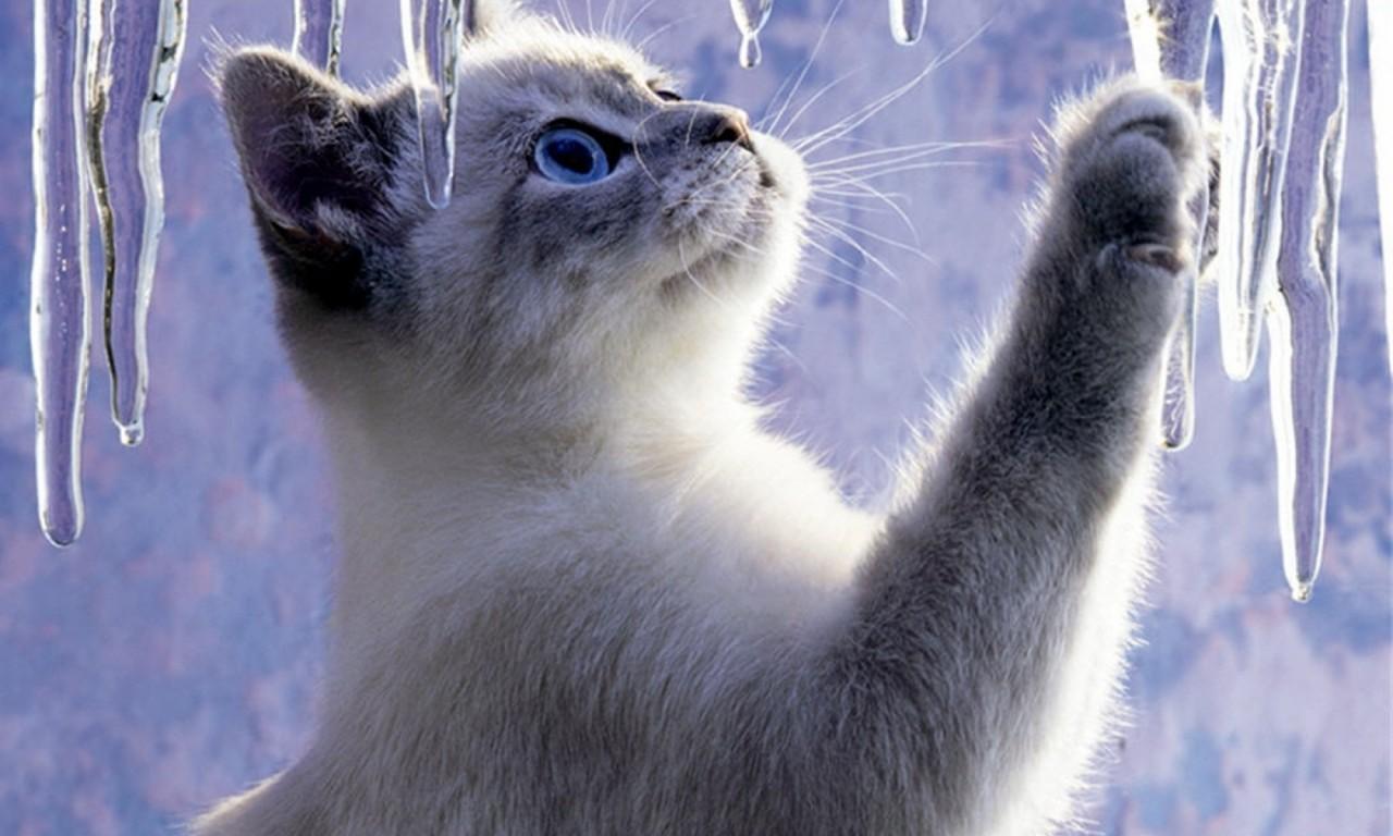 Котёнок (Юрий Михайлов)