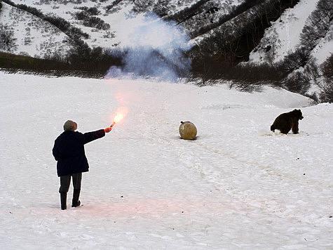 Сосуществовать с медведями надо без крайностей