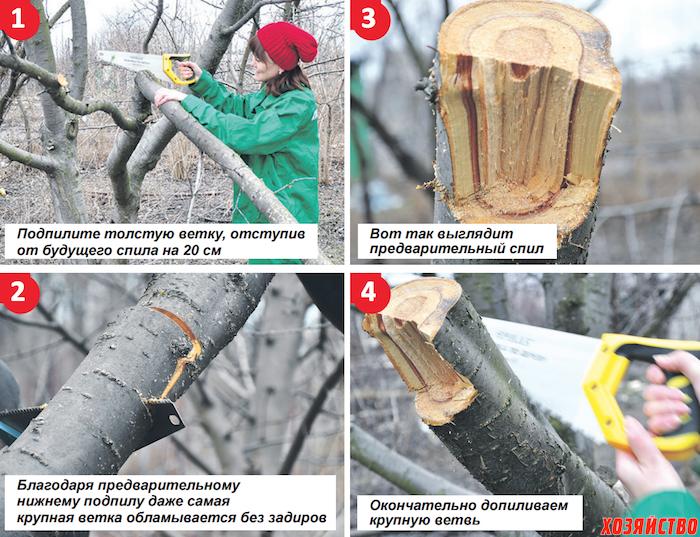 Как спилить толстую ветку у дерева