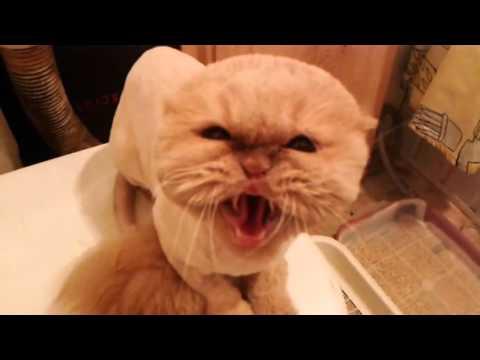 Самый злой в мире кот!!!