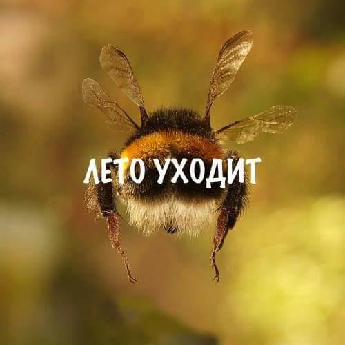 Леонид Мартынов.  Лето