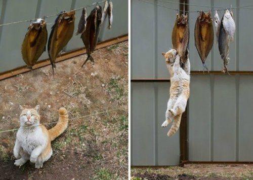 Криминальные кошки