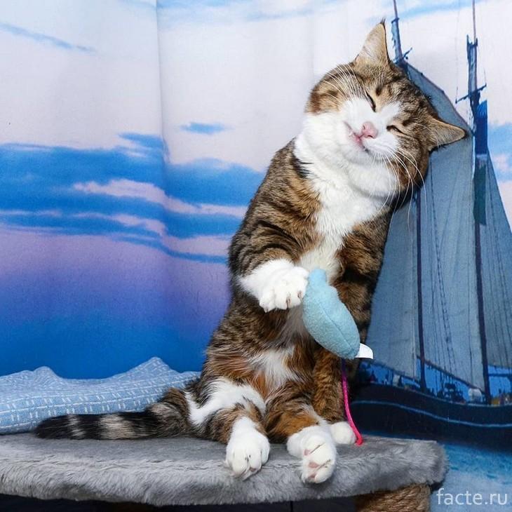 С ограниченными возможностями: кошка, ставшая звездой