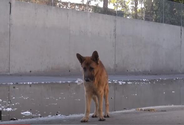 Он просто погладил собаку, бездомный пес лег и заплакал…