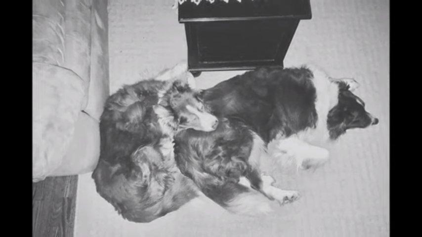 Рак забрал лучшего друга у этого пса