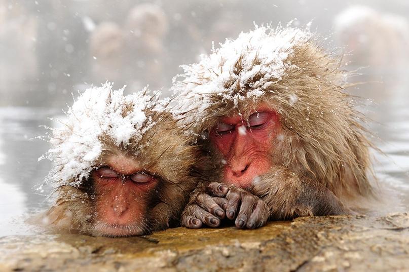 Эффект сотой обезьянки (что же делать лично мне?)