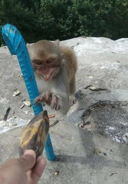 Смешные снимки животных (23 фото)