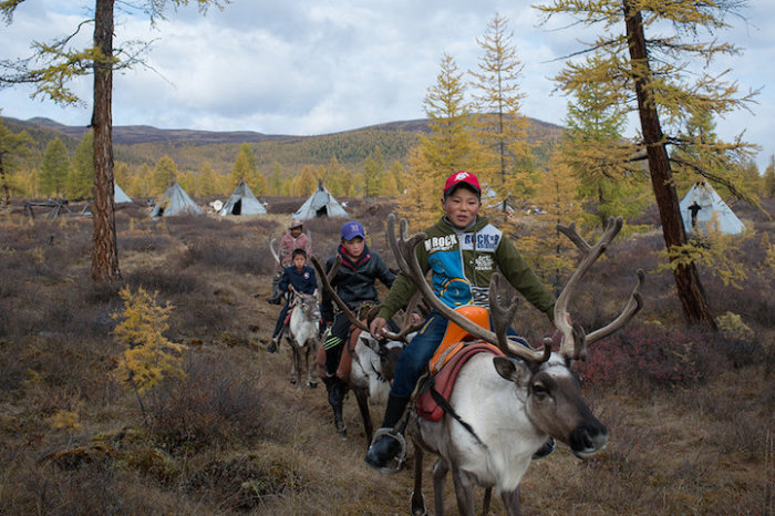 Племя кочевников, которые живут с оленями, ночуя в юртах.