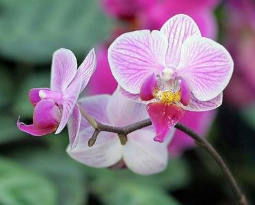 САД, ЦВЕТНИК И ОГОРОД. Уход за домашней орхидеей