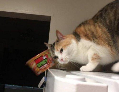 Забавные стоп-кадры с кошкам…
