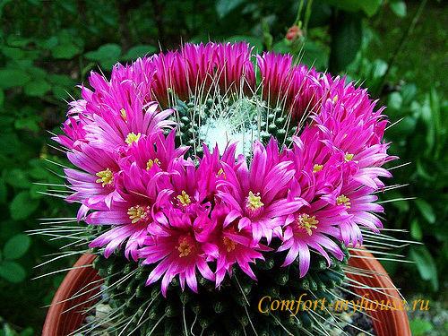 «Подари мне цветок». Почему не цветет кактус