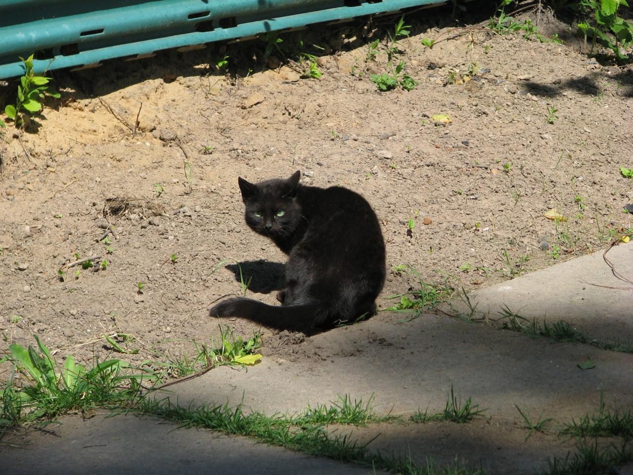 Братья наши меньшие: почему кошка гуляет сама по себе?