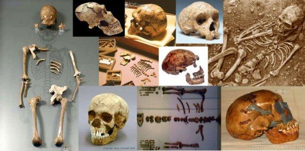 Самые распространенные мифы об эволюции человечества