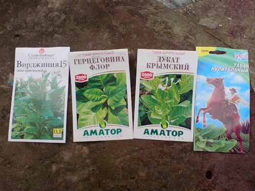 Выращивание и обработка табака в домашних условиях 4