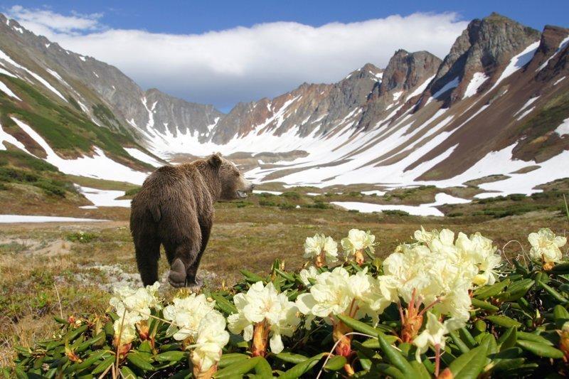 10 чудес Камчатки: самые кра…