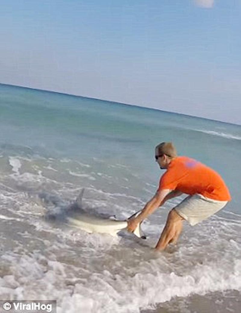 Мужчина своими руками выволок акулу на берег.