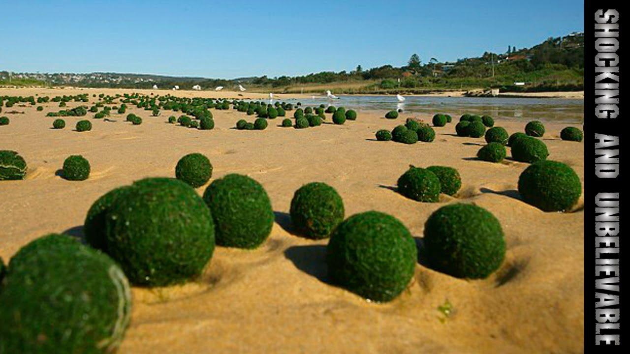 Зелёные шары из моря.