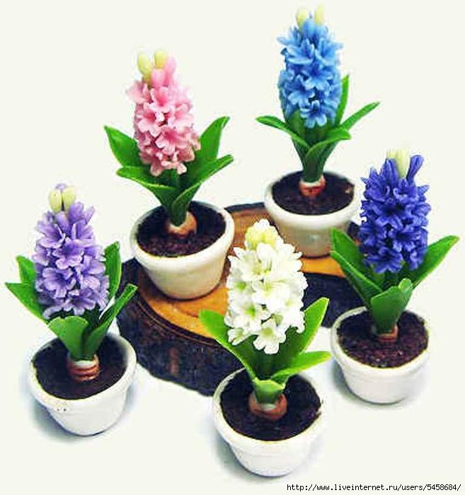 Уход за цветами гиацинтами в домашних условиях