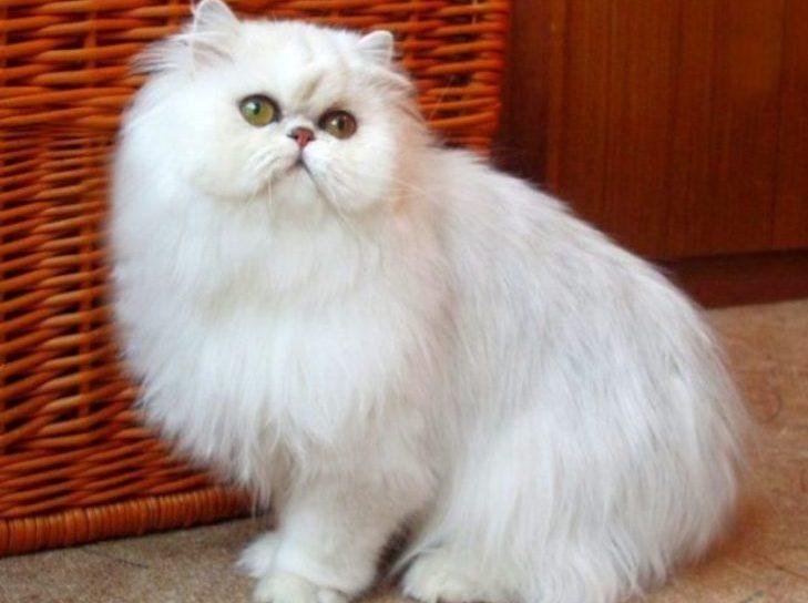Полет кота с карниза