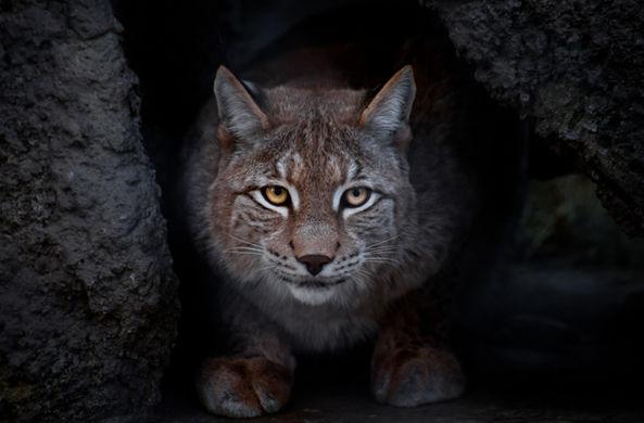 Под Воронежем замечен опасный хищник