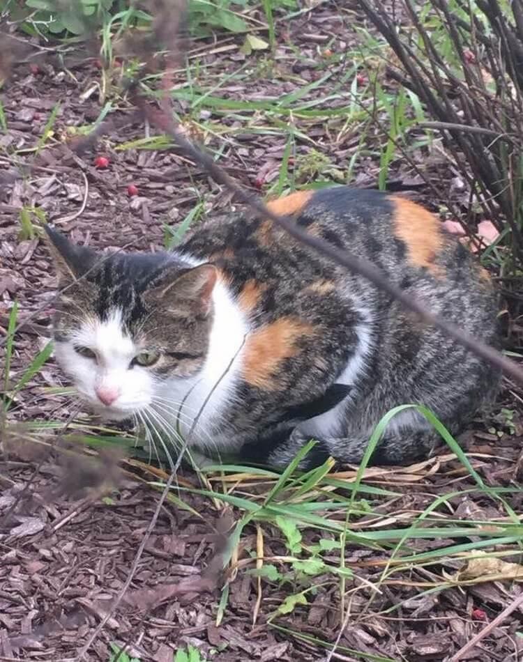 Котята попали в беду, и безд…