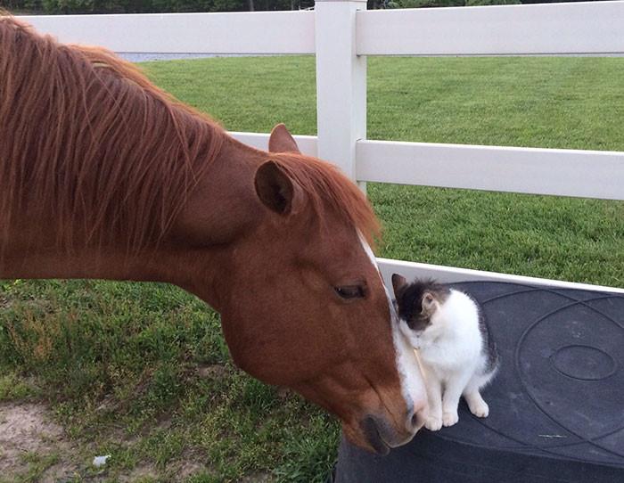 Кот и лошадь стали лучшими друзьями и постоянно проводят время вместе