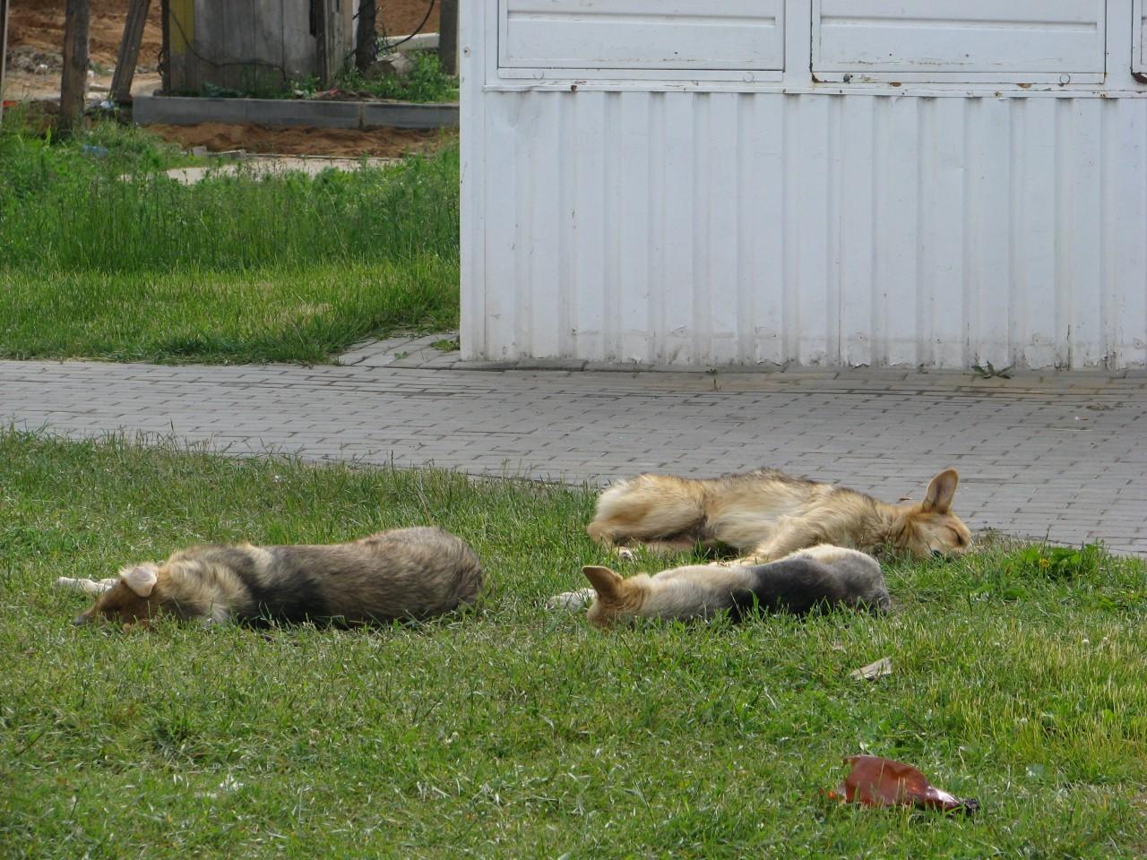 Братья наши меньшие: так нужно ли собаку за это наказывать?
