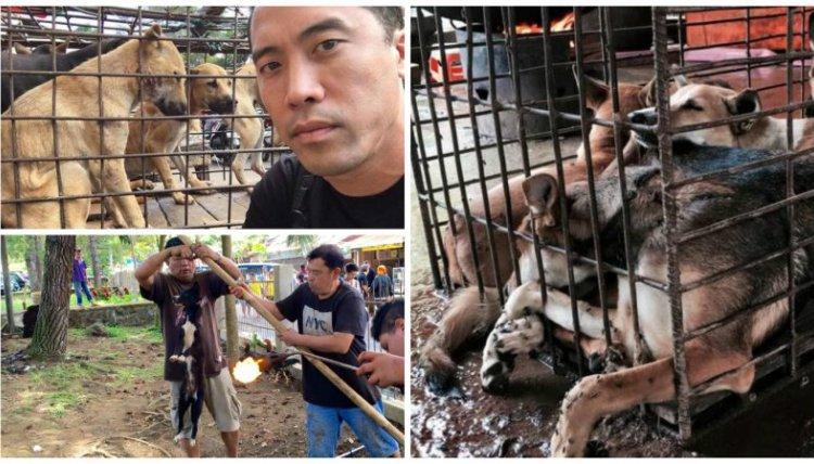 Парень спас от смерти тысячу собак на фестивале собачьего мяса в Китае