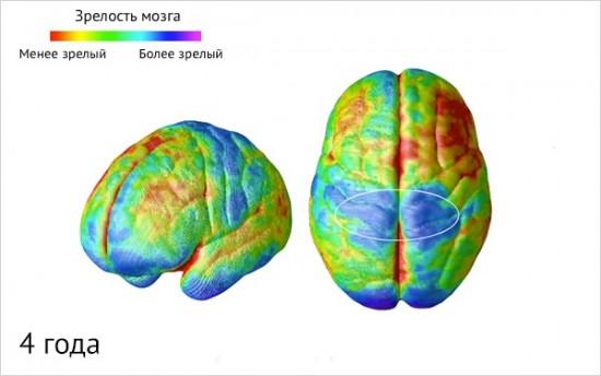 Как созревает детский мозг