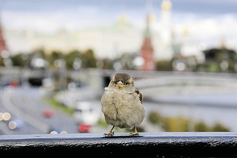 - Если близко воробей - ты готовь краюшку! Фото: Татьяна ЧЕРНИКОВА