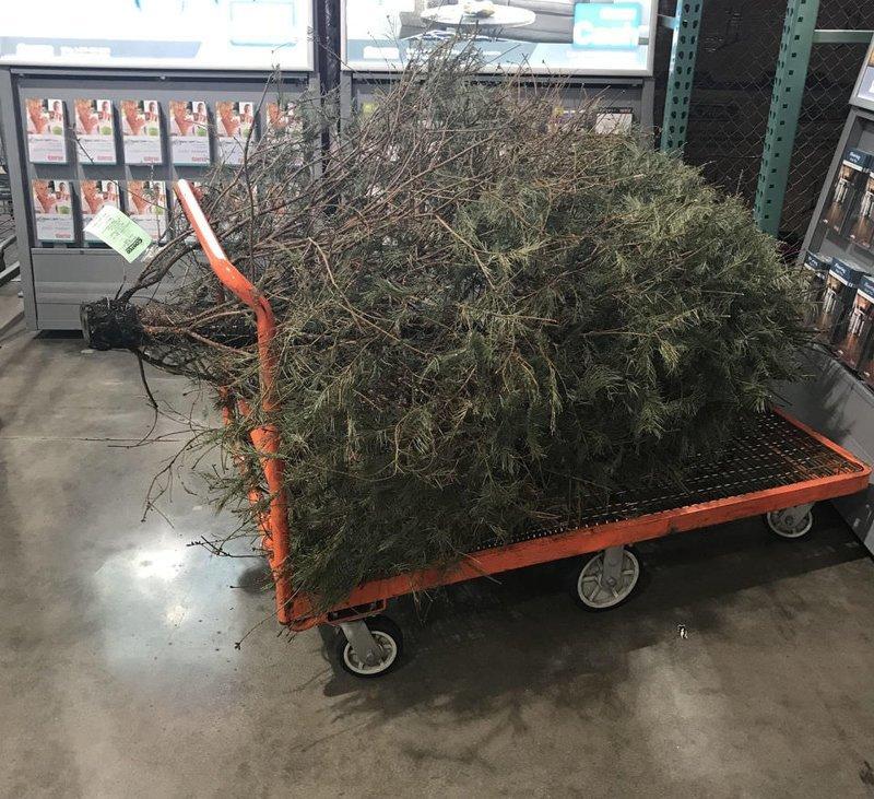 Американка попыталась вернуть елку в магазин после праздников америка, в мире, возврат, елка, люди, магазин, юмор