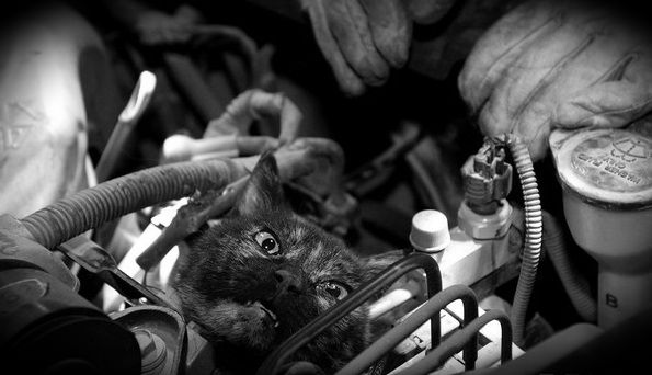 Кот поет песню своим спасителям